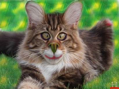 Cat Cool Funny Very Wallpapersafari