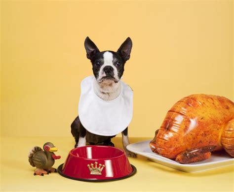 boston hates thanksgivingjpg