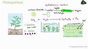 Gcse Biology Photosynthesis  Aqa 9-1