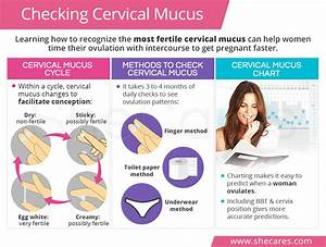 Checking Cervical Mucus