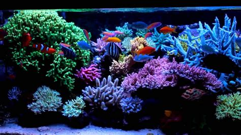 bureau aquarium sea reef aquarium 28 images reef aquascaping on reef