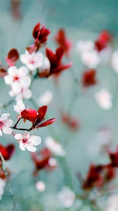 Spring Wallpapers Android Iphone Backgrounds Resolution 3dandroidwallpaper