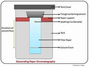 B For Biology  Chromatography