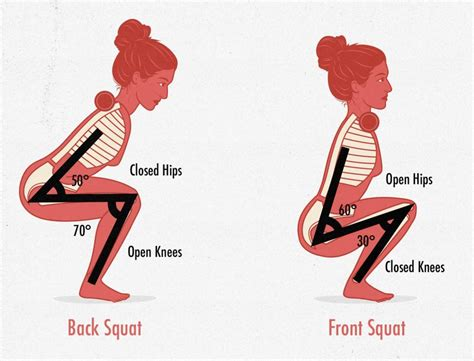 Organs, exemplified by such diverse components as brain, eyes, and liver, are one of several levels of organization in living organisms. The Skinny Gal's Guide to Squats — Bony to Bombshell