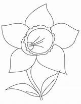 Daffodil Coloring Bulb Pages sketch template