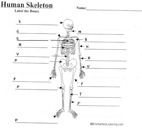 worksheet skeletal system labeling worksheet grass fedjp