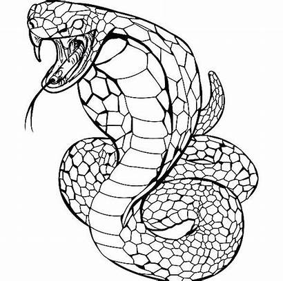 Snake Coloring Pages Cobra Angry Animal