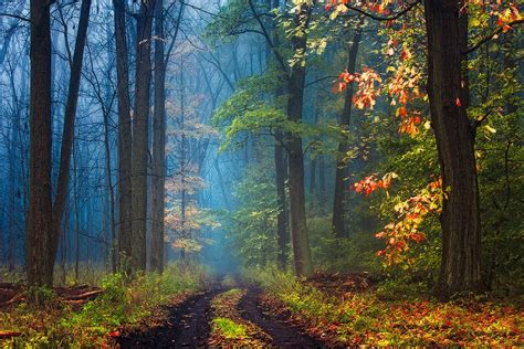 road, Mist, Forest, Leaves, Grass, Trees, Fall, Nature ...