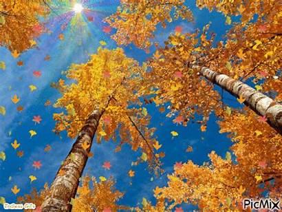 Fall Picmix Scenery Falling Leaves Tree Background