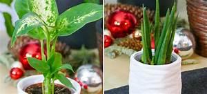Pflanzen Für Drinnen : pflegeleichte pflanzen f r jugendliche an weihnachten velanga ~ Frokenaadalensverden.com Haus und Dekorationen