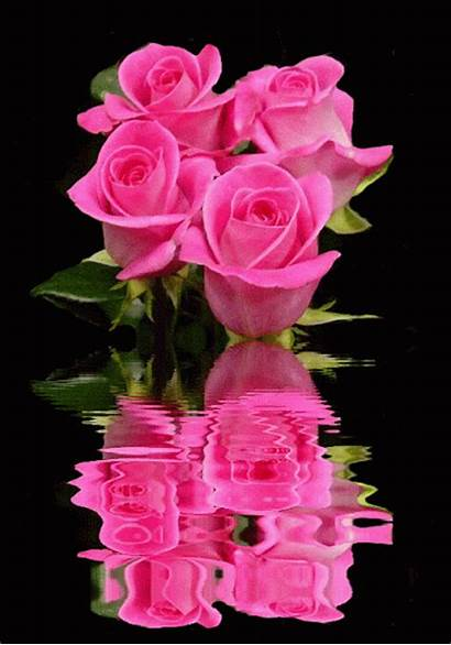 Roses Animated Rosas Gifs Flores Flowers Gifmaniacos