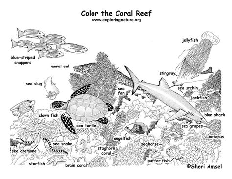 coral reef labeled coloring page