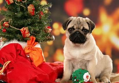Christmas Dog Wallpapers Dogs