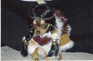 Funny Image Collection: Funny Dog Halloween Costumes Pictures!