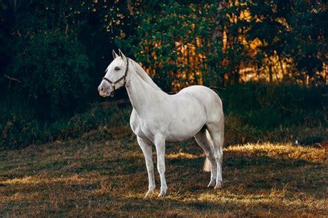 horse stallion pexels horses animal tory thee mengklaim lanez dapatkan megan informasi tentang equestre breed loyal most gratis schlagobers topfen