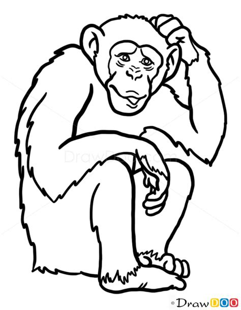 draw monkey wild animals