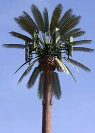 Palm Tree Cell Tower
