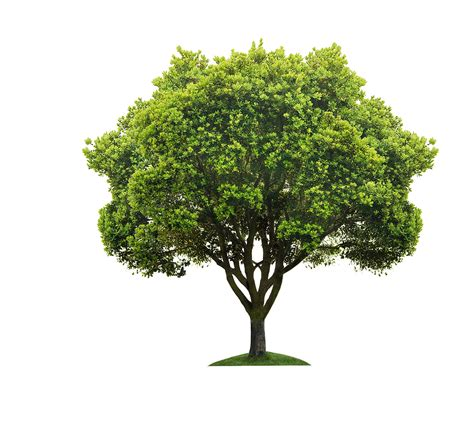 Tree Of Images My Tree Image Potato999 Db