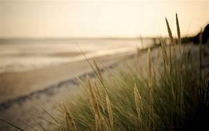close up plant. vegetation ears green sea sand beach blur ...