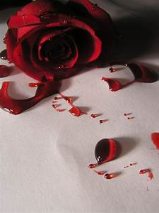 Poetry of Reality - A Bleeding Rose - Page 1 - Wattpad