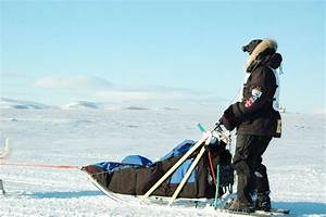 Dog Sled Side View | www.pixshark.com - Images Galleries ...