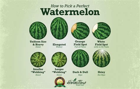 How To Pick A Perfect Watermelon Eagle Eye Produce