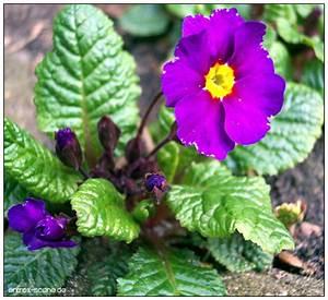 Aktuelle Blumen Im April : blumen pflanzen makroaufnahmen april 2005 j rg b sche web fotografie ~ Markanthonyermac.com Haus und Dekorationen