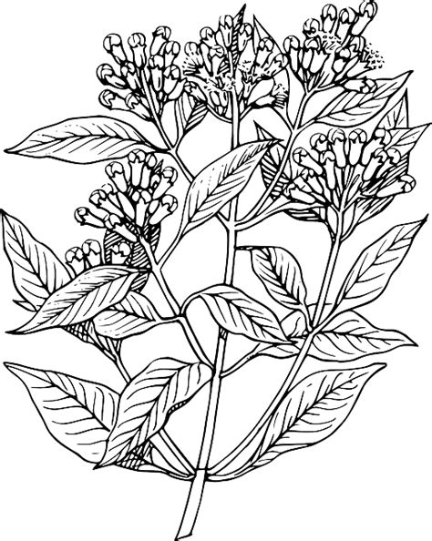cloves plants trees  vector graphic  pixabay