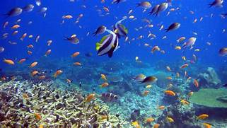 Wallpaper mafia island  tanzania  fish  underwater  coral  reef      Coral Reef Wallpaper 1920x1080