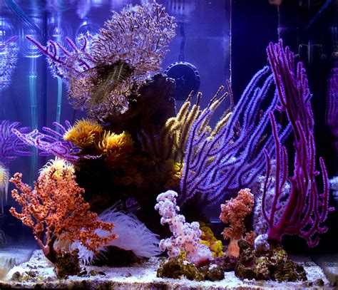 reef builders five of our favorite nano aquariums reef builders the reef and marine