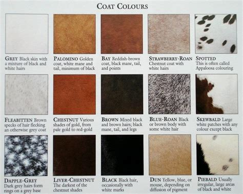 24 best images about color charts of horses on