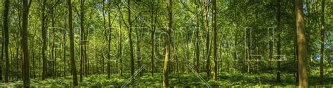 emerald green panorama forest popular wall mural photowall