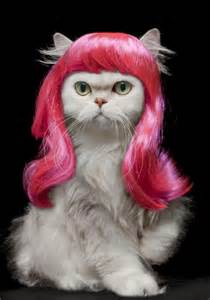cat wigs cats wearing wigs the things