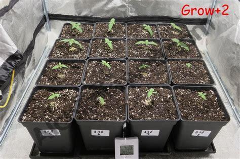 quel terreau pour cannabis interieur culture de graines de cannabis r 233 guli 232 res en int 233 rieur du growshop alchimia