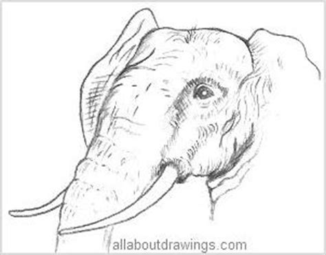 wildlife pencil drawings animals   forest