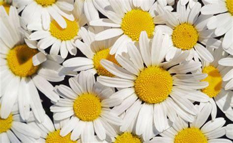 santa fiore orari cavour in fiore abbazia di santa cavour to