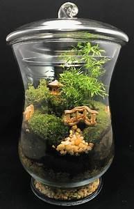 Terrarium Plante Deco : diy faire son propre terrarium plante pour d corer la ~ Dode.kayakingforconservation.com Idées de Décoration