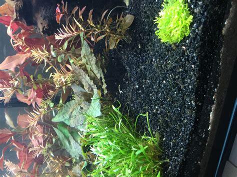 algue dans l aquarium probl 232 me d algues dans l aquarium page 2