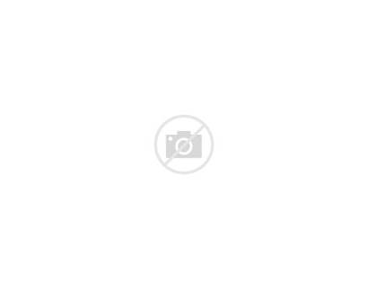 Urban Street Tree Median Nyc 9a Canopy