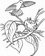 Hummingbird Coloring Pages Young Feeds Printable Juniors Feed Play Colouring Baby Birds Hummingbirds Bird Sheets Colors Drawing sketch template