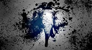 Elephant Wallpaper Tumblr | Wallpapers Gallery