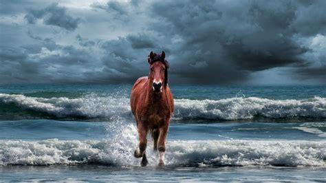 Horse Running On Water Wallpaper