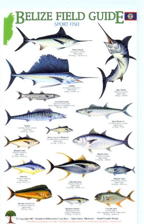 belize field guides sport fish nhbs field guides