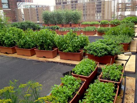 up in the air rooftop gardens hgtv