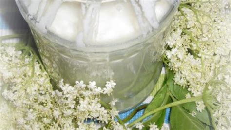 rezept holunderbl 252 ten joghurt selbst herstellen frag mutti