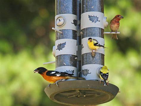 attract birds to your backyard part 4 bird foods
