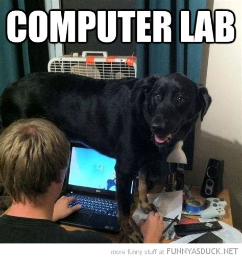 Dog On Computer Meme - a real computer lab puns pinterest funny computer labs and humor