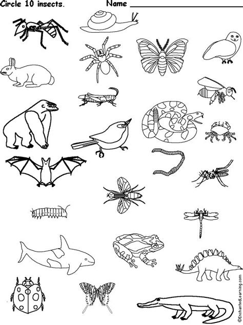circle  insects animal worksheets theme words circle