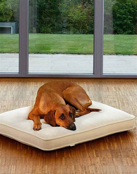 cuscini cani cuscini per cani ortopedici con riempimento lattice