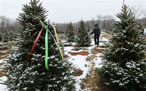 all about christmas trees where all the christmas trees national news 4699